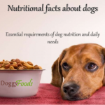 Dog Food Facts You Should Know
