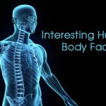 Fun Facts About Human Body
