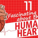 Fascinating Human Heart Facts