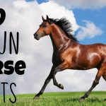 12 Fun Facts About Horses