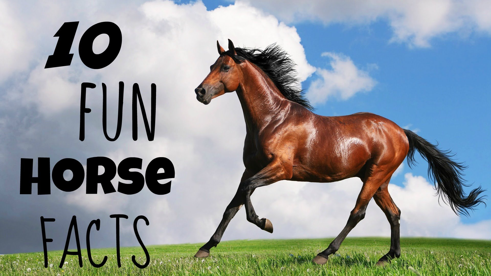 Fun Facts About Horses A1facts