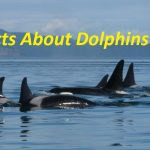 Facts About Dolphins